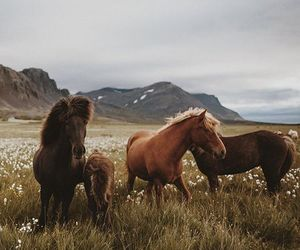 horse, animal, and nature image