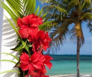 beach, flowers, and ocean image