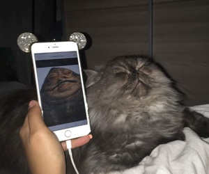 cat, funny cat, and star wars image