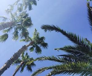 ocean, followme, and palms image