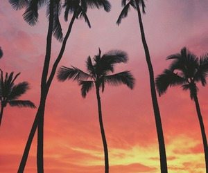 color, palm trees, and sky image