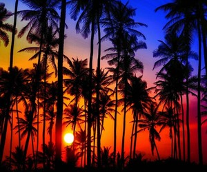 awesome, sky, and palms image