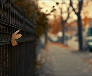 autumn, leaf, and street image