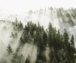 tree, tumblr, and love image