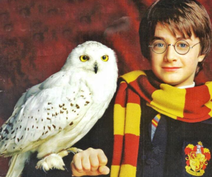 harry potter, hedwig, and harry image