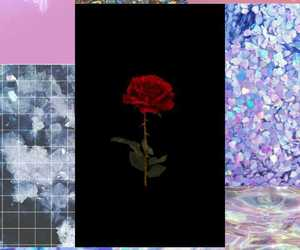 aesthetic, rose, and shiny image
