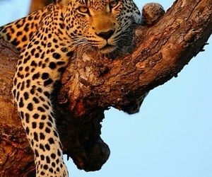 chill, leopard, and tree image