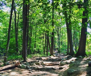 hike, nature, and summer image
