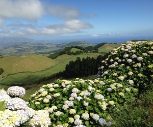 azores, flowers, and hydrangea image