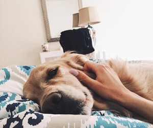 bed, dog, and cute image
