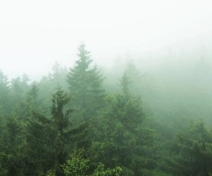 fog, forest, and mystery image