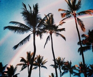 rainbow, summer, and palm trees image