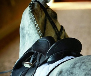 bridle, dover, and horse image