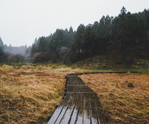 forest, hipster, and nature image