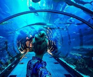 adventure, aquarium, and blue image