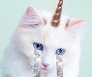 cat, unicorn, and tears image