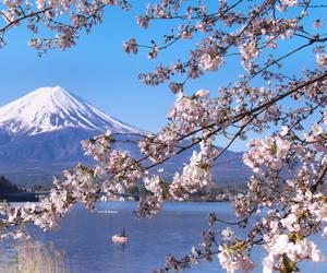 japan, nature, and sakura image