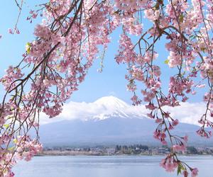 japan, mt fuji, and photography image