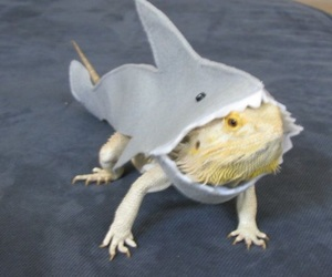 lizard, shark, and cute image
