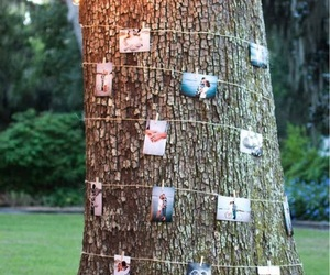wedding, decoration, and tree image