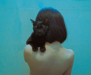 blue, cat, and girl image