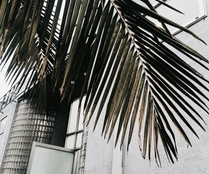 green, plants, and palm trees image