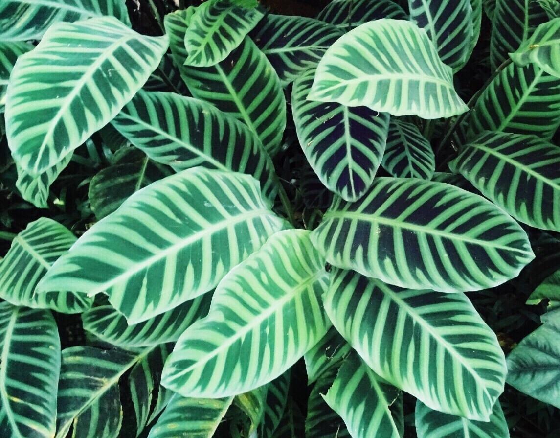 Tropical Leafs Tropical Botanical Garden The Big Island Hawaii U S A Selfmade 09 08 2017