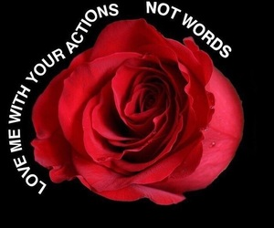 rose, love, and quotes image