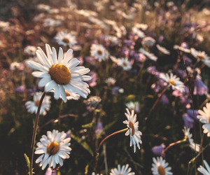 flowers, summer, and nature image