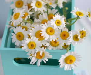 accessories, daisy, and flowers image