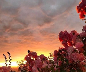 flowers, sky, and sunset image