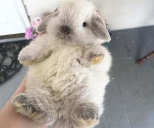 animal, bunny, and fluffy image