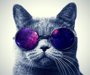 cat, wallpaper, and funn image