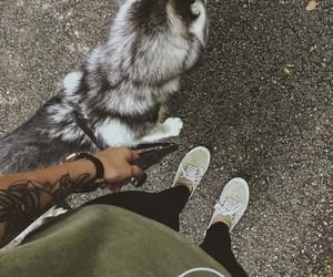 dog, husky, and tattoo image