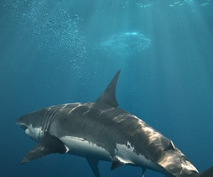 animal, nature, and shark image