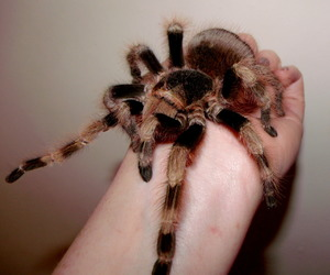 spider and tarantula image