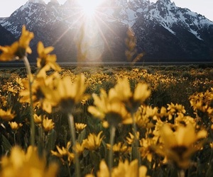 flowers, mountain, and travel image
