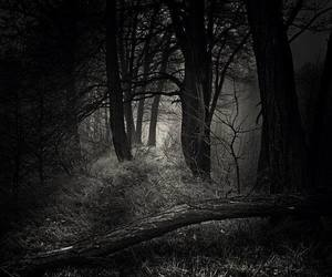 dark, Darkness, and forest image