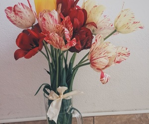 colors and tulips image