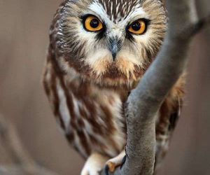 owl and animal image