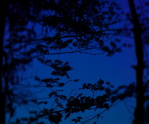 blue, dark blue, and trees image