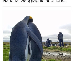 funny, penguin, and memes image