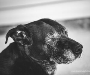 black and white photo, dogs, and pet portrait image