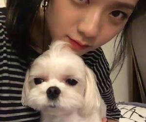 blackpink, jisoo, and dog image