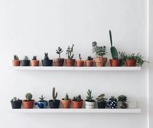 plants, cactus, and aesthetic image