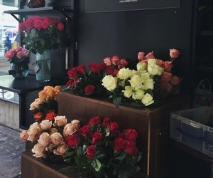 flower, red, and store image