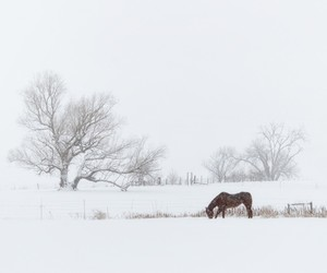 landscapes, snow, and wilderness image