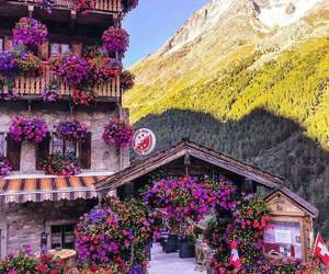flowers, switzerland, and mountains image
