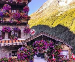 flowers, switzerland, and travel image