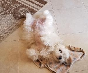 dog, dogs, and naps image